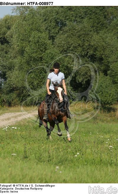 Frau reitet Deutsches Reitpony / woman rides pony / HTFA-008977