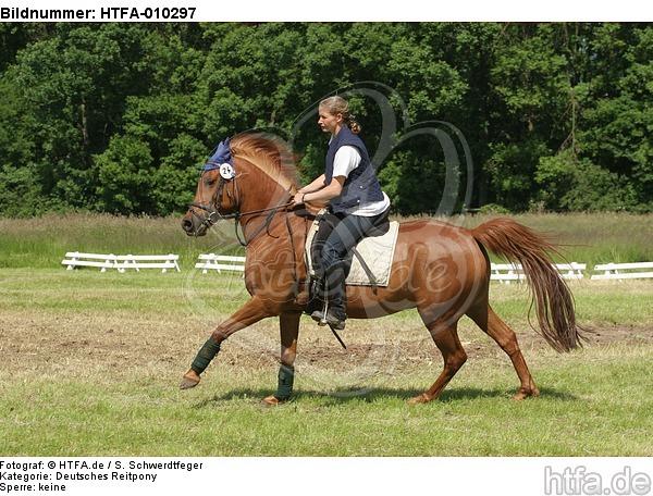 Frau reitet Deutsches Reitpony / woman rides pony / HTFA-010297