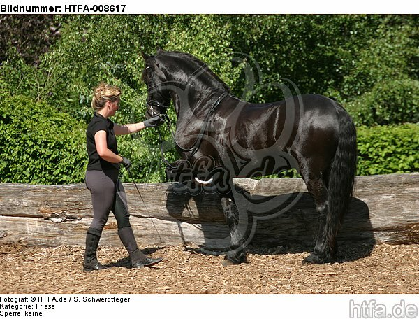 Frau trainiert Friese / woman trains friesian horse / HTFA-008617