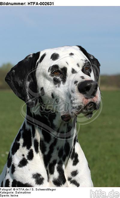 Dalmatiner / dalmatian / HTFA-002631