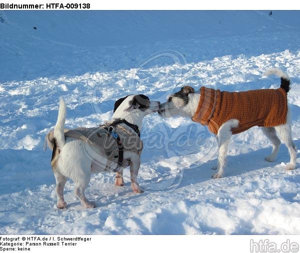 2 Hunde im Schnee / 2 dogs in snow / HTFA-009138