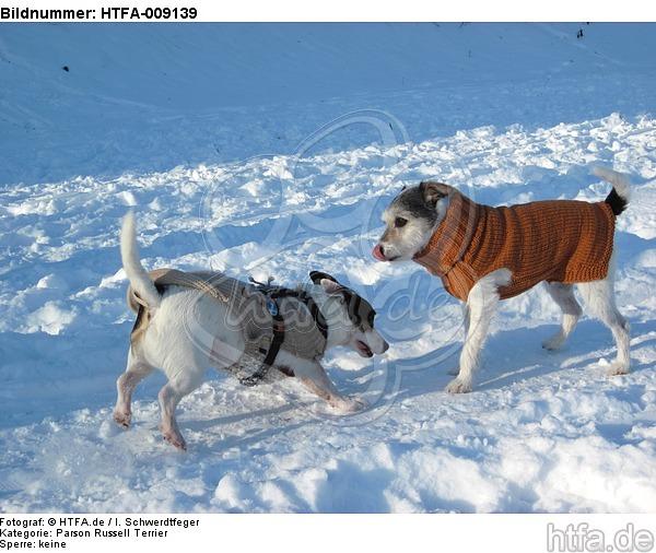 2 Hunde im Schnee / 2 dogs in snow / HTFA-009139