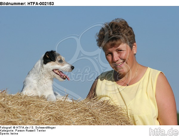 Parson Russell Terrier / HTFA-002153