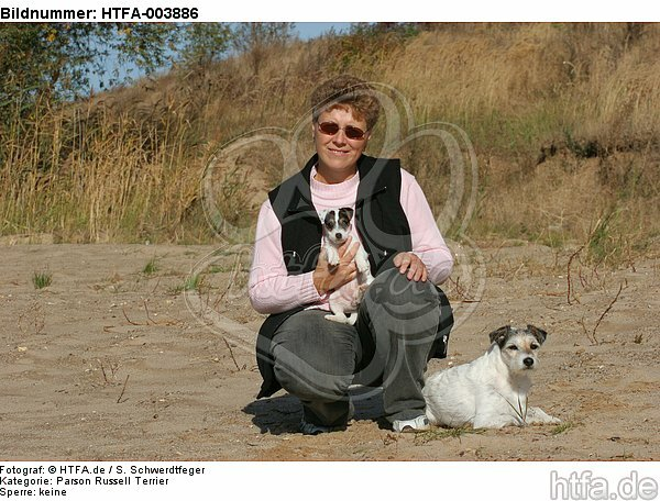 Parson Russell Terrier / HTFA-003886