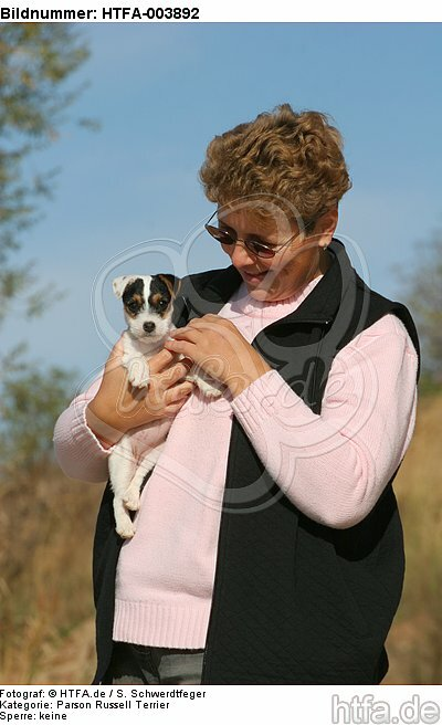 Parson Russell Terrier Welpe / parson russell terrier puppy / HTFA-003892