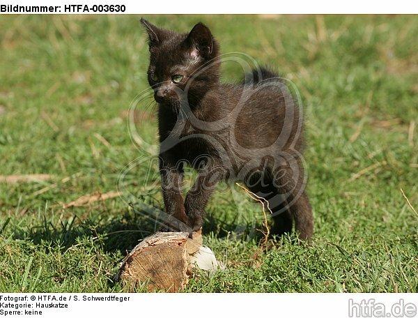 K�tzchen / kitten / HTFA-003630