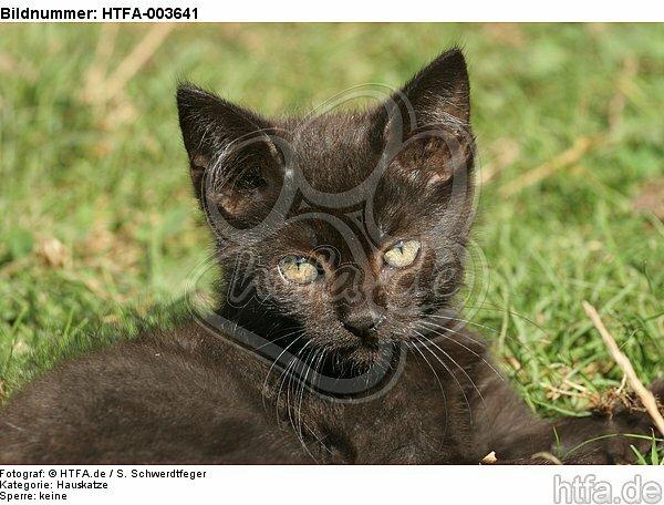 K�tzchen / kitten / HTFA-003641