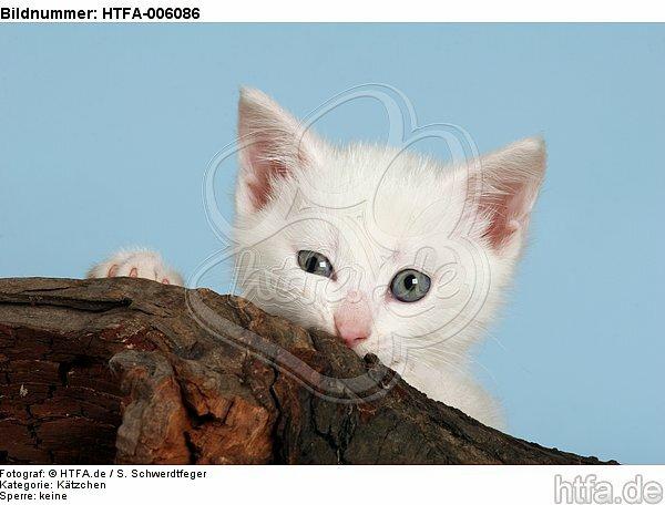 K�tzchen / kitten / HTFA-006086