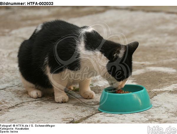 Hauskatze / domestic cat / HTFA-002033