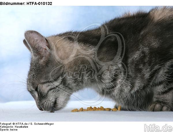 fressende Hauskatze / eating domestic cat / HTFA-010132