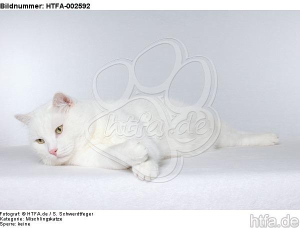 Mischlingskatze / domestic cat / HTFA-002592