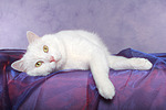 Mischlingskatze / domestic cat