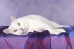 Mischlingskatze / domestic cat