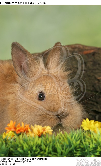 L�wenk�pfchen / lion-headed bunny / HTFA-002534