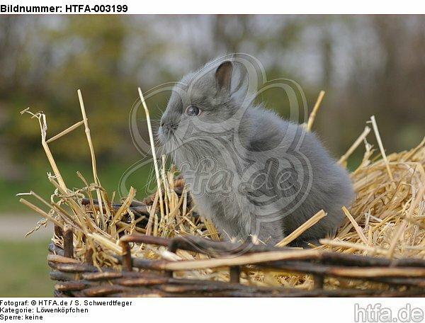L�wenk�pfchen / lion-headed bunny / HTFA-003199