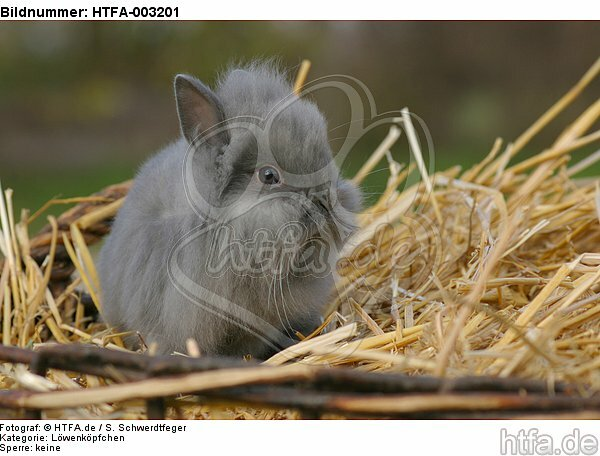 L�wenk�pfchen / lion-headed bunny / HTFA-003201