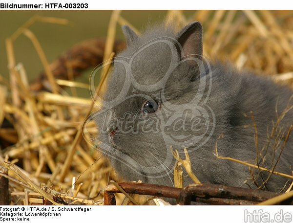 L�wenk�pfchen / lion-headed bunny / HTFA-003203