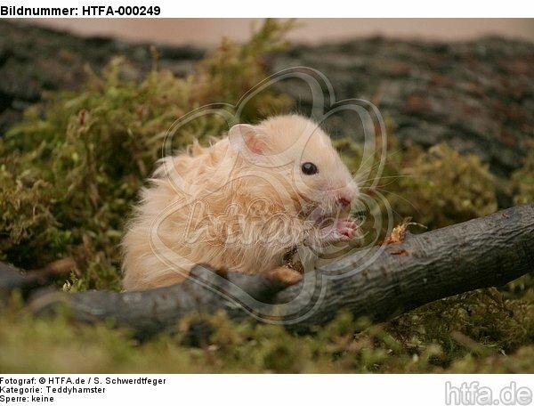Teddyhamster / hamster / HTFA-000249