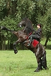Frau reitet Friese / woman rides friesian horse