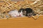 3 Katzenbabys / 3 kitten