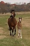 Deutsche Reitponies / ponies