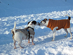 2 Hunde im Schnee / 2 dogs in snow