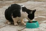 Hauskatze / domestic cat