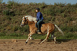 M�dchen reitet Haflinger / girl rides haflinger horse