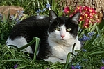 Hauskatze im Fr�hling / domestic cat in spring