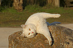 Hauskatze f�hlt sich wohl / domestic cat is feeling good