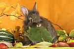 L�wenk�pfchen / lion-headed bunny