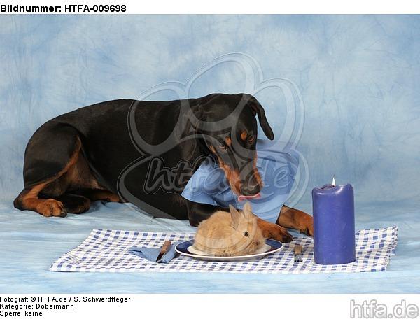 Dobermann beim Essen / Doberman Pinscher at dinner / HTFA-009698
