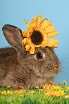 Kaninchen / rabbit