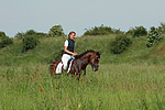 Deutscher Reitpony Hengst / pony stallion