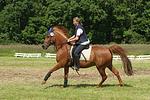 Frau reitet Deutsches Reitpony / woman rides pony