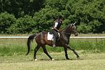 Frau reitet Sachsen Anhaltiner Warmblut / woman rides warmblood