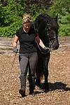Frau f�hrt Friese / woman with friesian horse