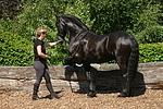 Frau trainiert Friese / woman trains friesian horse