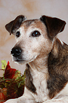 Mischling Portrait / mongrel portrait