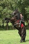 Frau reitet Friese / woman rides friesian horse
