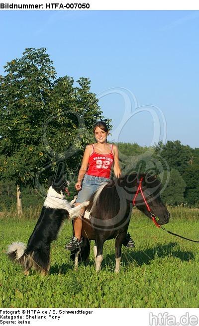 Shetland Pony und Border Collie / Shetland Pony and Border Collie / HTFA-007050