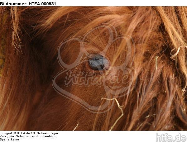 Schottisches Hochlandrind Auge / highland cattle eye / HTFA-000931