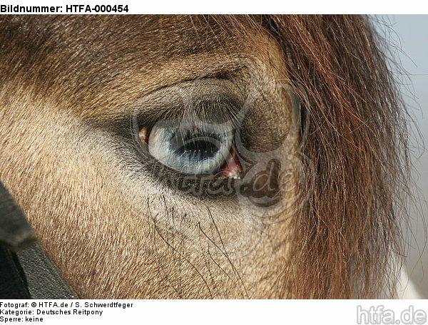 Deutsches Reitpony mit Fischauge / pony eye / HTFA-000454