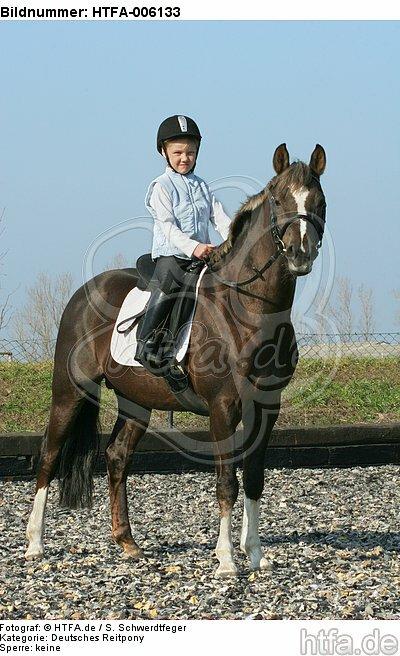 Deutscher Reitpony Hengst / pony stallion / HTFA-006133