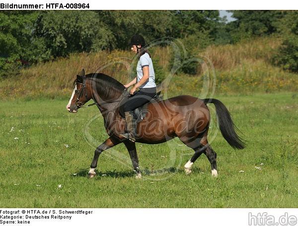 Frau reitet Deutsches Reitpony / woman rides pony / HTFA-008964