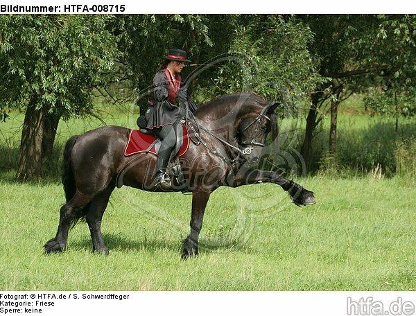 Frau reitet Friese / woman rides friesian horse / HTFA-008715
