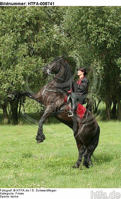 Frau reitet Friese / woman rides friesian horse / HTFA-008741
