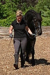 Frau f�hrt Friese / woman with friesian horse