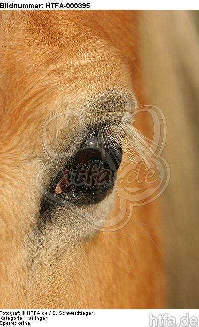 Haflinger Auge / haflinger horse eye / HTFA-000395