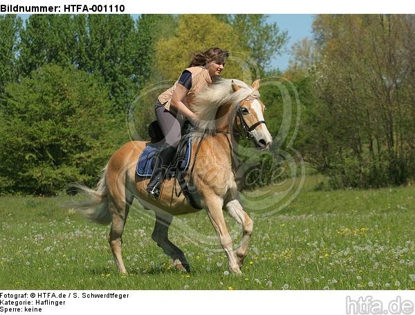 Frau reitet Haflinger / woman rides haflinger horse / HTFA-001110